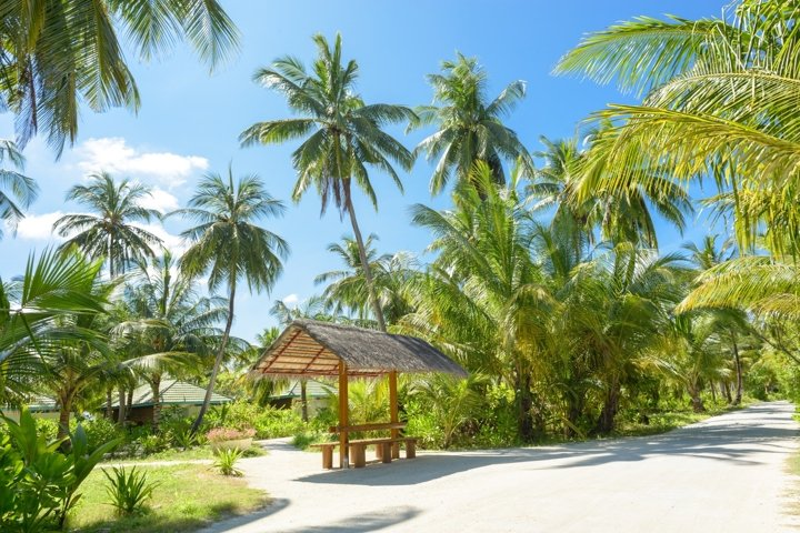 Brown Wooden Bench Surrounded by Palm Trees