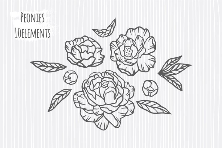 Peonies svg bundle