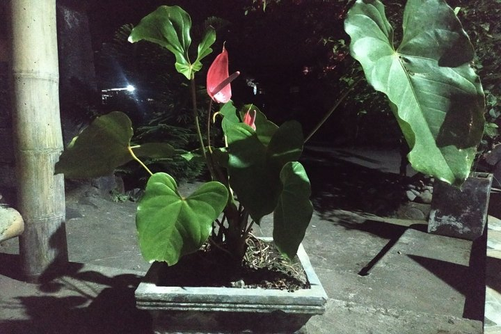 beautiful view of potted flowers at night