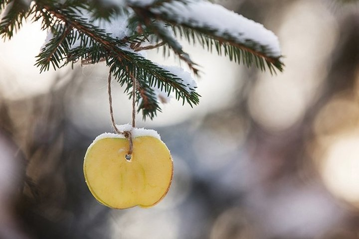 Creative Christmas tree decoration with a slice of apple.