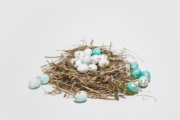 Small eggs in the nest