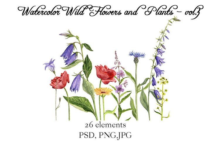 Watercolor Wild Flowers and Plants vol.3