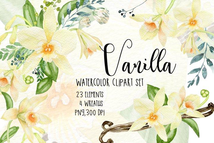 Vanilla watercolor clipart,White Orchid clipart