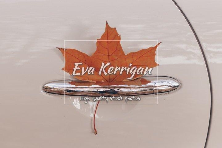 Autumn yellow maple leaf in the car door.