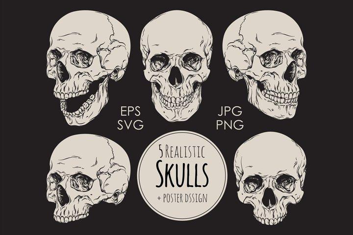 Realistic Skulls EPS SVG JPG PNG commercial use