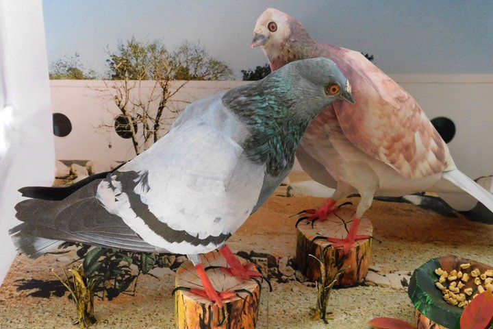 3 d paper craft Pigeon make it yourself pigeon model