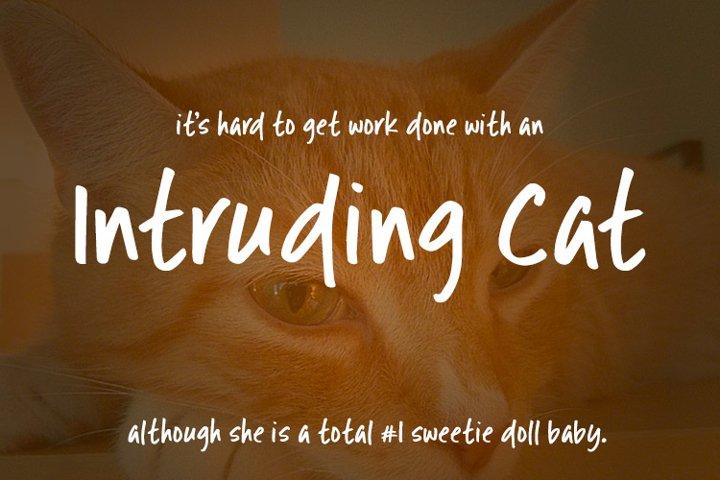 Intruding Cat example