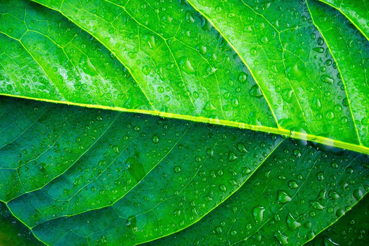wet leaf of an exotic plant closeup