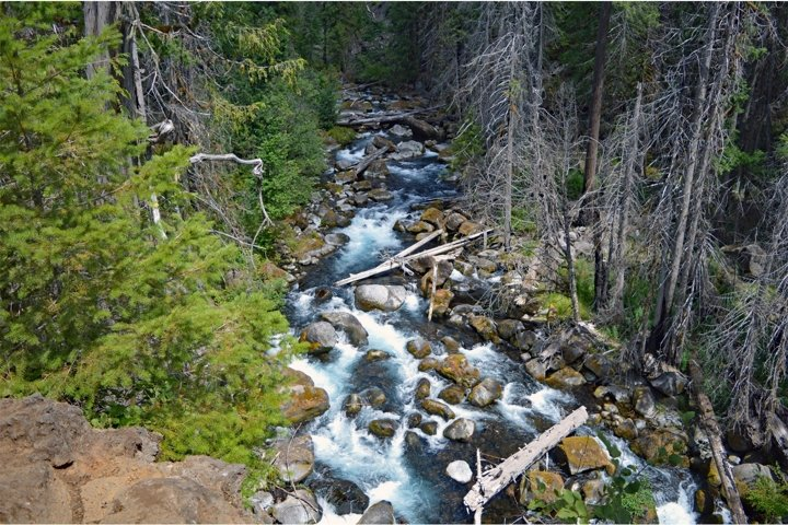 Stock Photo, Forest, River, Oregon