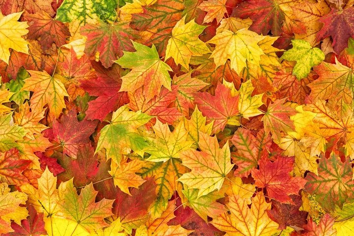 Autumn leaves fall. Long Banner. Autumn background