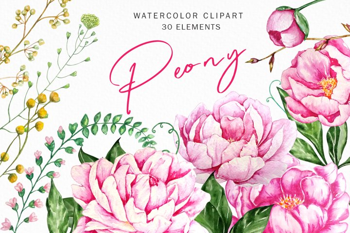 Peonies Watercolor Flowers Clipart