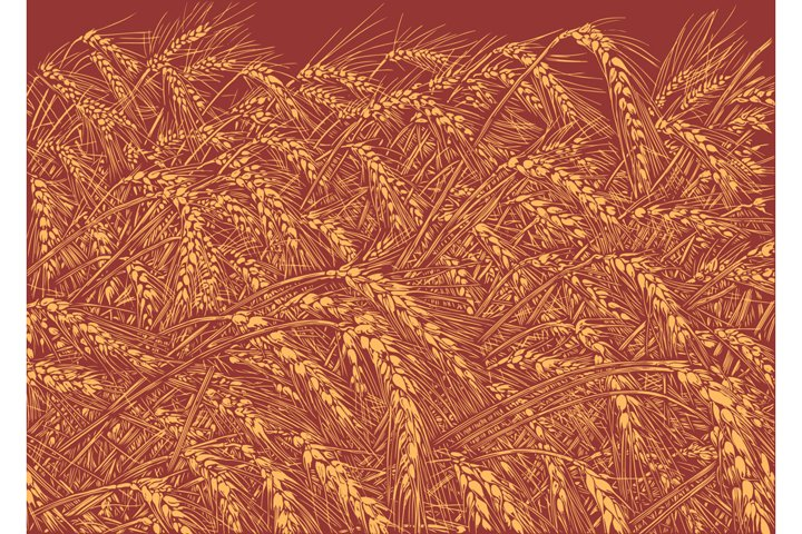 Wheat field. Hand drawn illustration. Vector engraving.