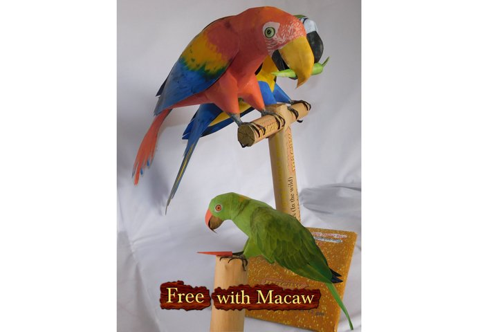 bird macaw