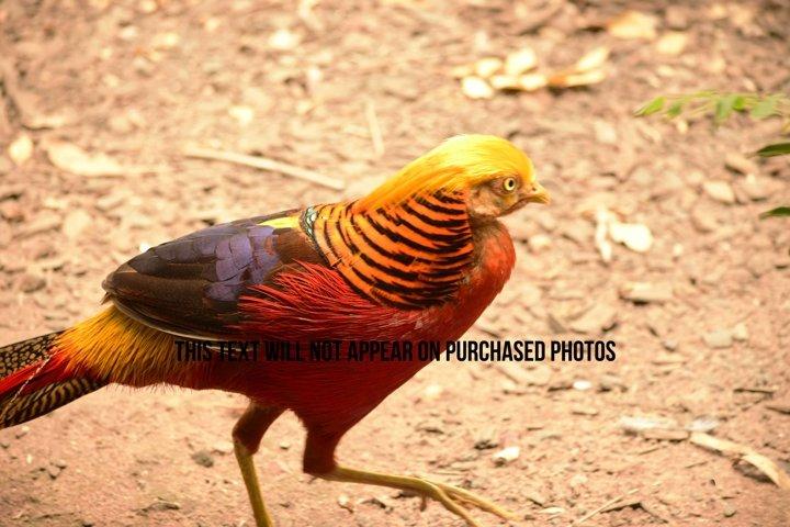 9 Beautiful Birds example 8