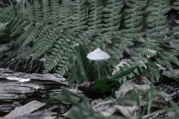 White mushroom near the fern. Forest landscape.