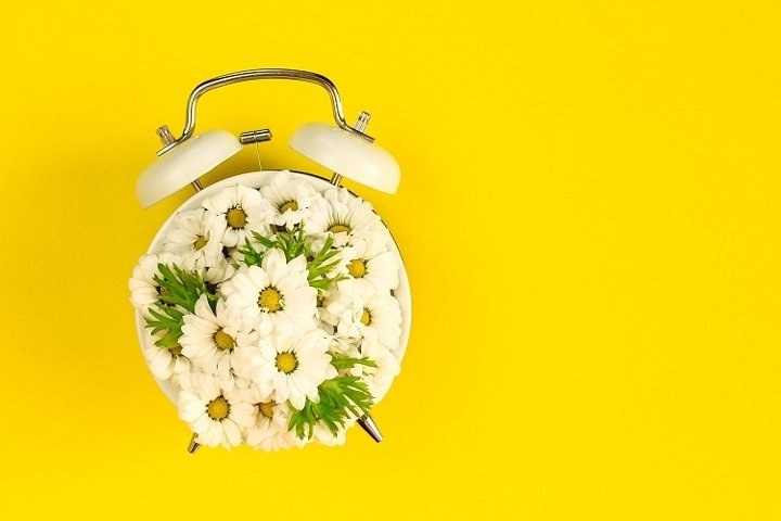 Summertime concept with alarm clock and chamomile flowers