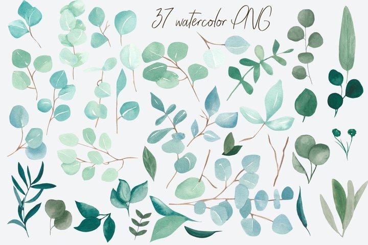 Eucalyptus bundle, watercolor eucalyptus clipart example 2