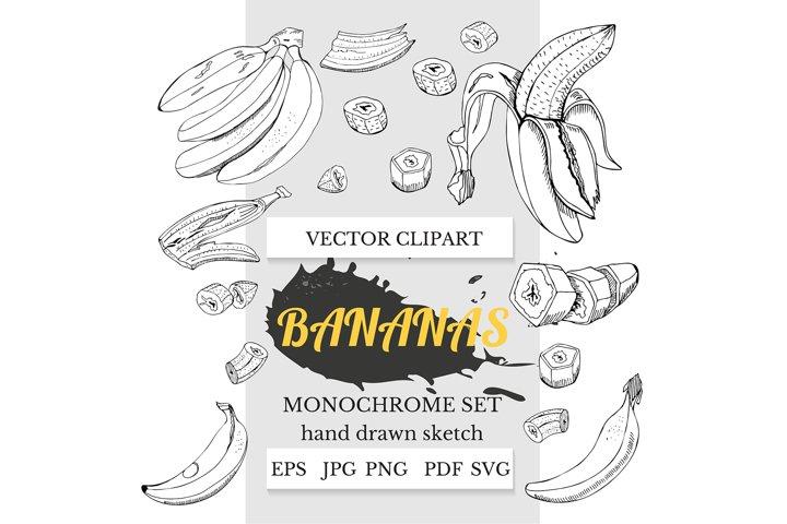 Hand drawn ink sketch of banana plant . Banana art.