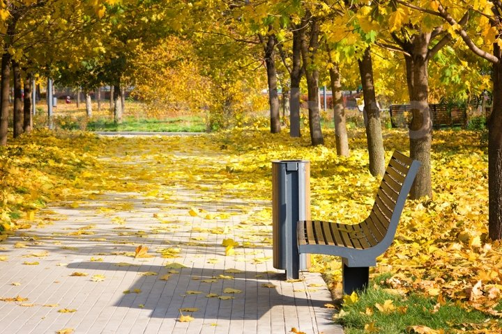 Bench in the park, golden autumn, sunny day