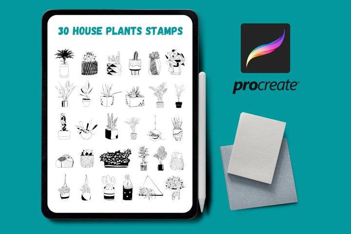 Procreate House Plants Stamps   Cactus Procreate Brush