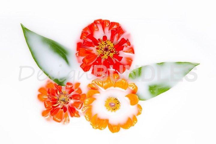 Orange and red marigolds in a milk bath. Conceptual photo