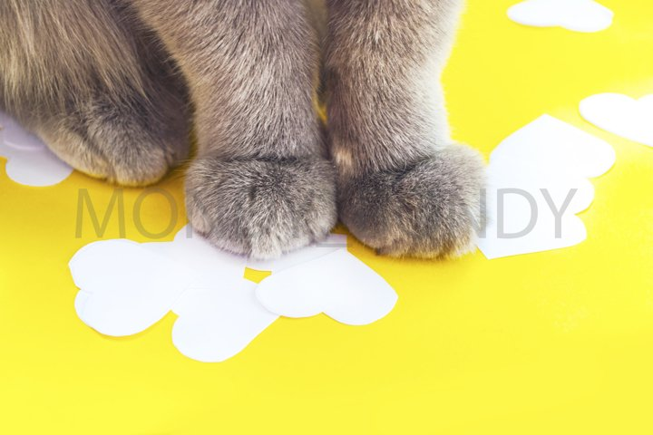cat legs on a yellow background close-up
