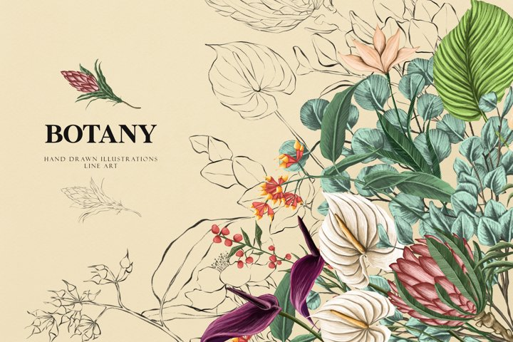 Botany clipart, Flower color and line clipart, fine art