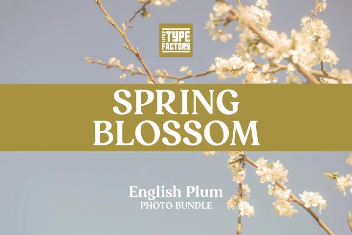 Spring Blossom English Plum Photo Bundle plus FREE LR preset