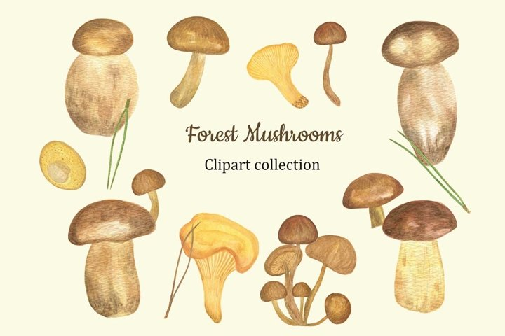 Forest Mushrooms Watercolor Clipart