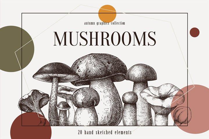 Vector Edible Mushrooms Collection