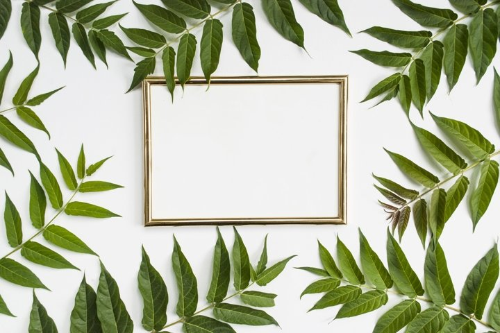 Stylish modern composition. Golden empty frame and green