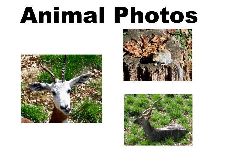 Animal Photo collection