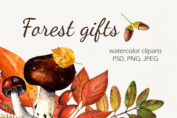 Forest gifts watercolor set
