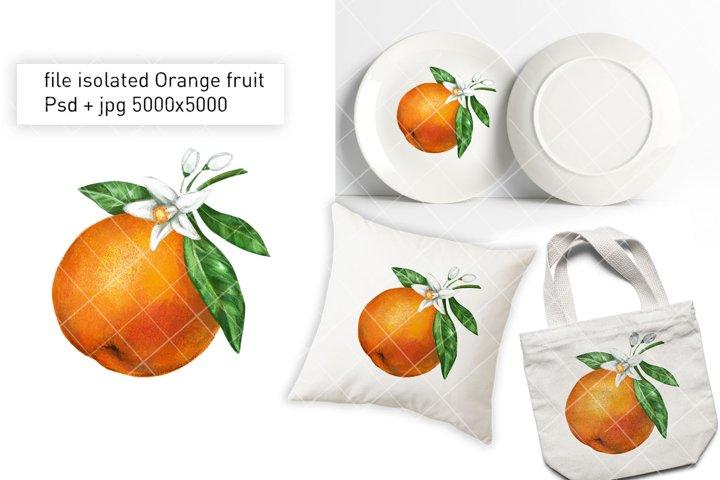 Hand drawn blooming orange Fruit