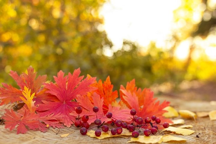 Autumn berries with red maple leaves on stump in the forest