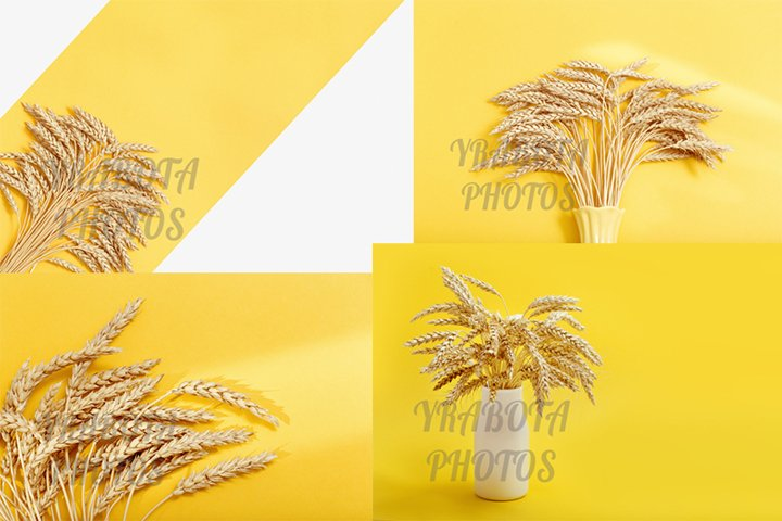 Ears of ripe wheat, rich harvest concept