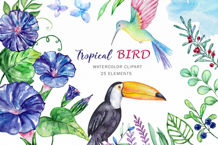 Watercolor hummingbird and toucan clipart, flowers clipart