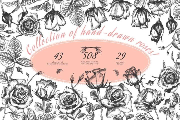 Hand drawn sketch Roses, Vector botanical illustrations