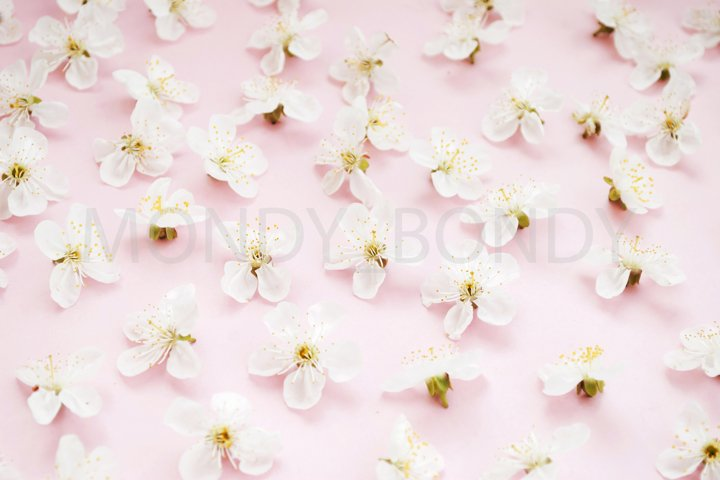Texture of white flowers on a pink background. The beginning