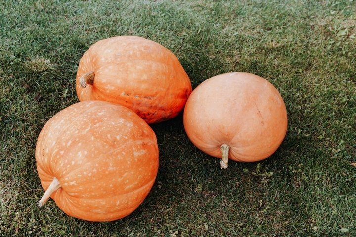 Three pumpkins on the green grass