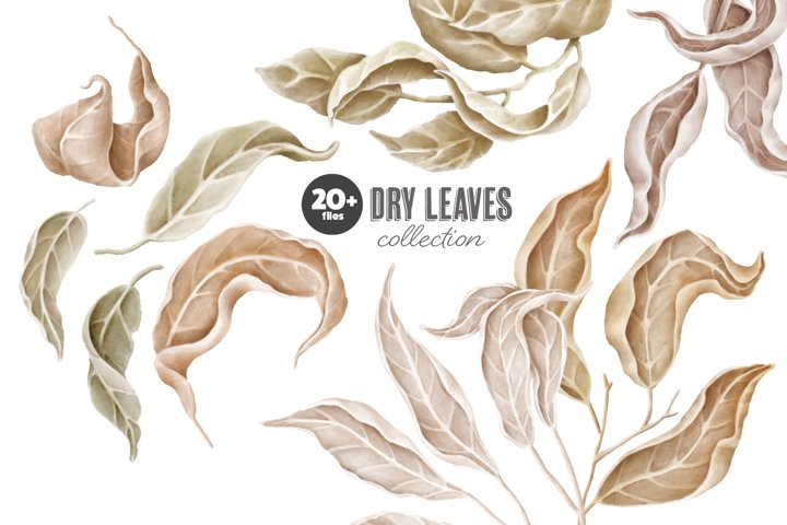 Dry leaves clipart collection
