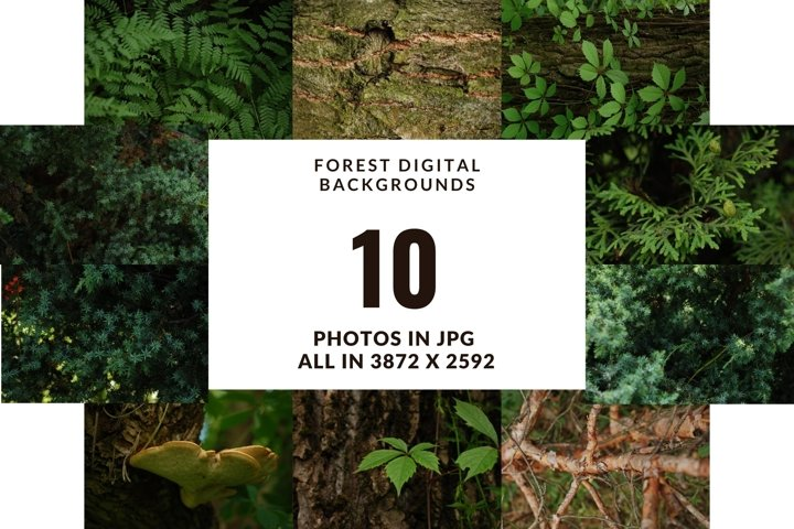 Forest digital photo backgrounds in jpg