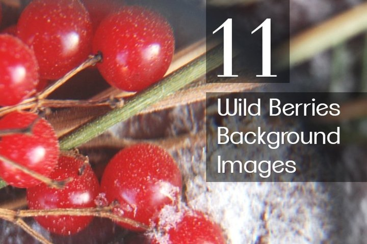 Wild Berries Background Stock Images