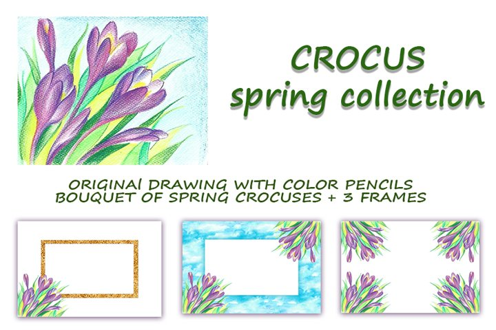 Crocus spring collection. Drawing and flower frames