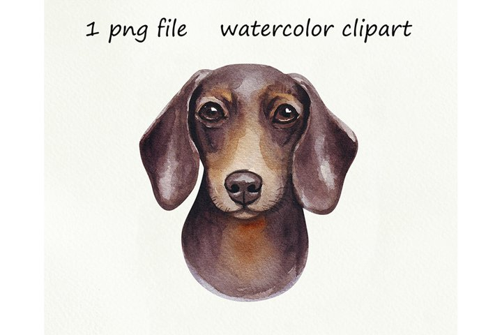 Watercolor dog png, Sausage Dog, Dachshund, hand drawn