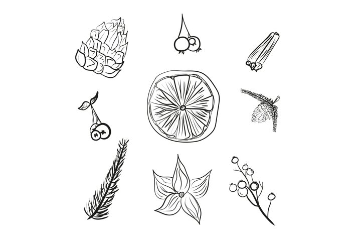 Doodle winter floral set isolated vector illustration.