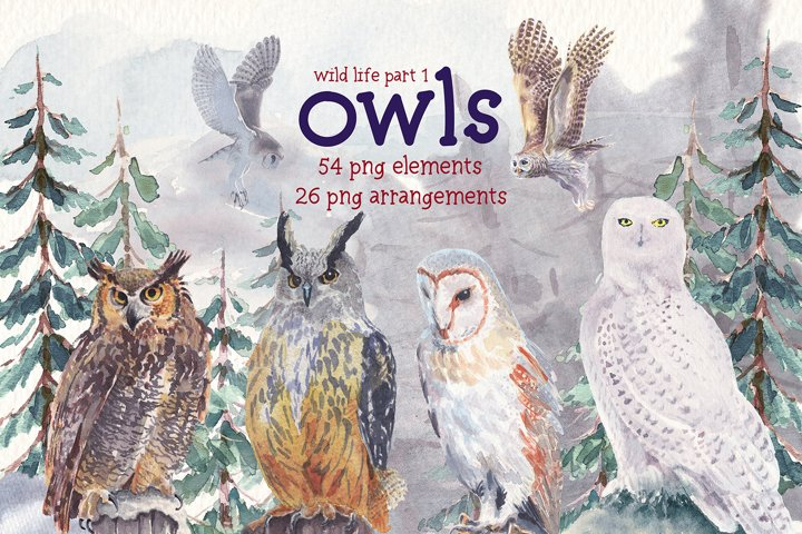 Wild life-Owls watercolor clipart