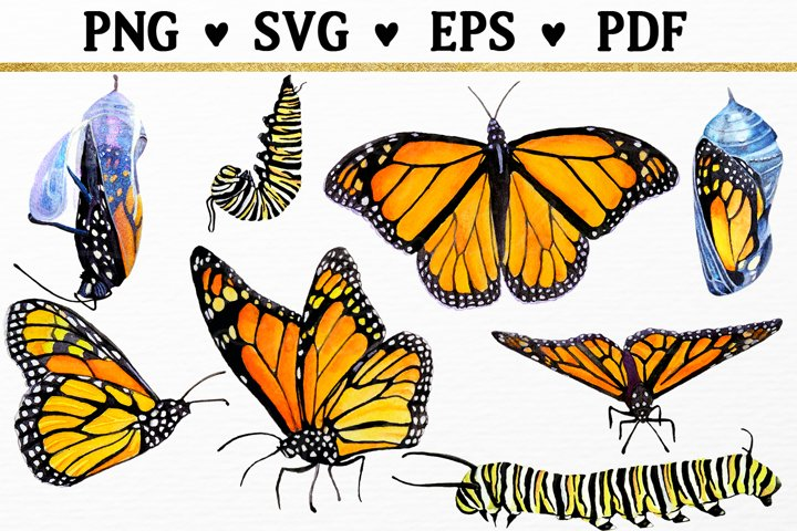 Monarch Butterfly Bundle Watercolor Clipart