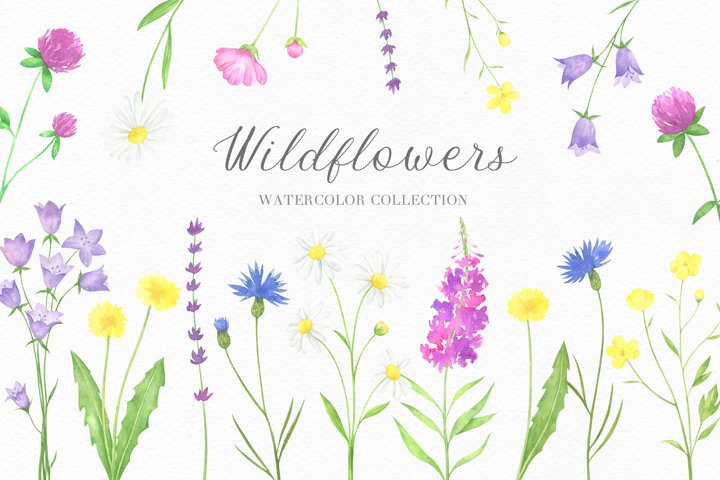 Summer Wildflowers Watercolor Collection