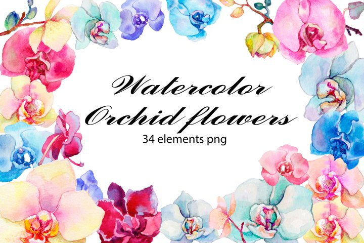 The Orchid flowers. Watercolor clipart collection.